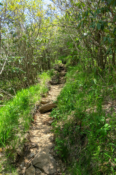 Mountains-to-Sea Trail -- 5,480'
