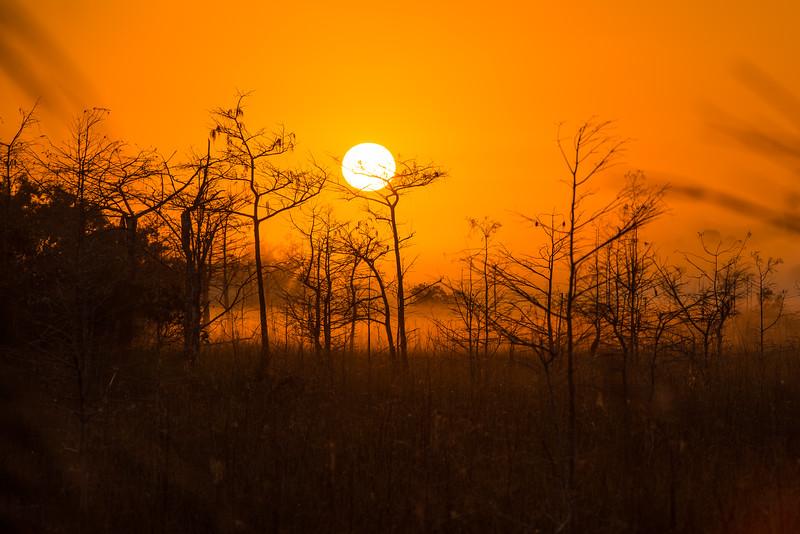 Everglades (34 of 60).jpg