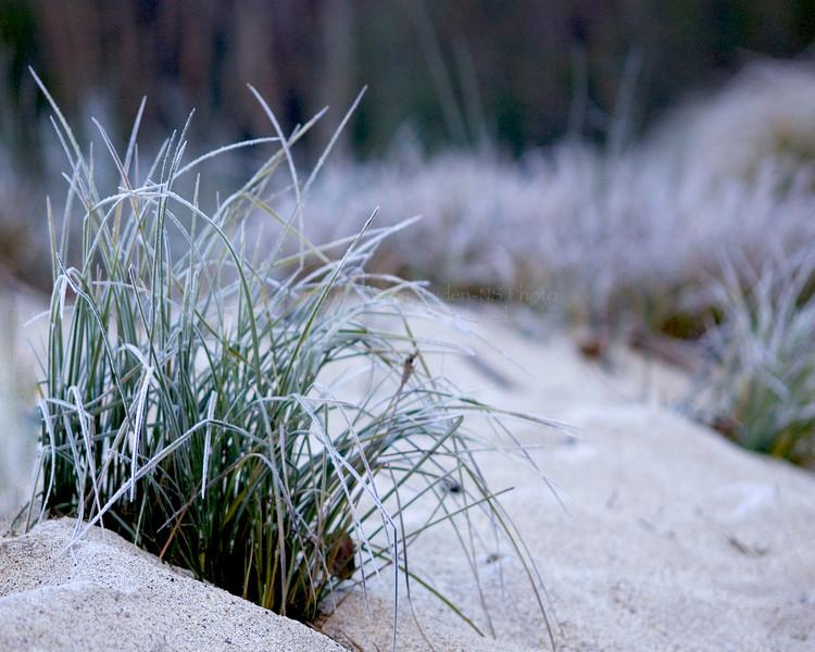 Merced River Grass Yosemite, California