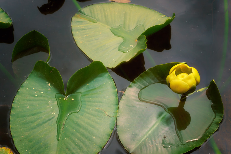 20170617_Kevin Wenning_LN_Lilly_Lake_Spring.jpg