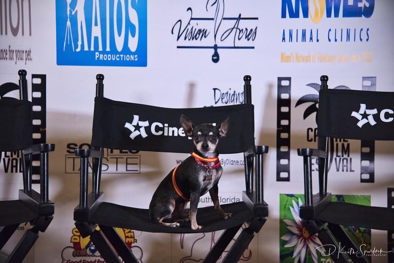 Canine Film Festival at the Cinéapolis