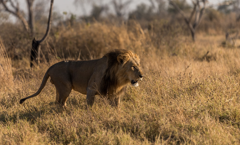 Botswana_June_2017 (3926 of 6179).jpg