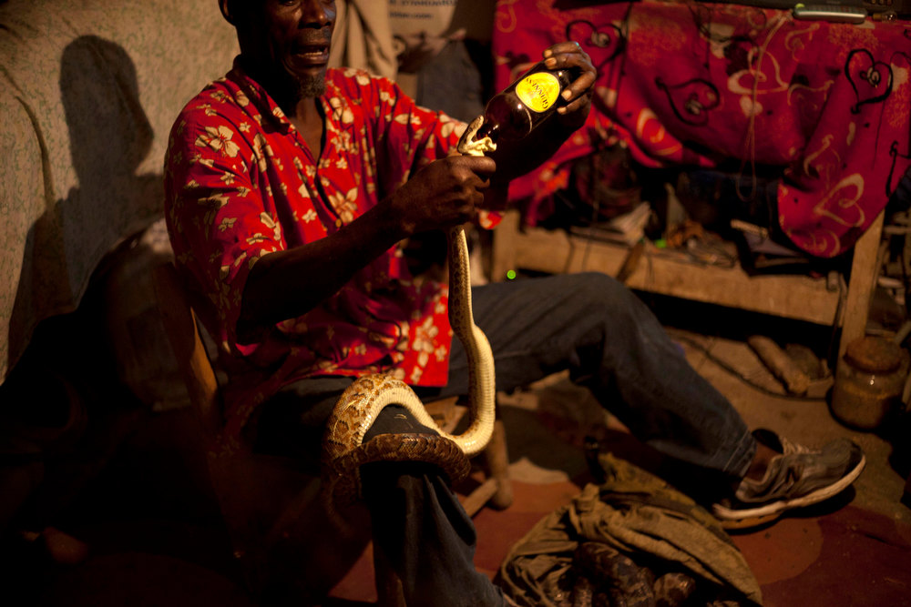 . In this Jan. 24, 2013 photo, snake handler Saintilus Resilus uses a bottle to pour water into a snake\'s mouth as he works with his snakes inside his home in Petionville, Haiti. Resilus sees himself as something of a performance artist, showing off with snakes and other animals that Haitians don\'t see every day, earning tips from impromptu audiences during the pre-Lenten Carnival season. (AP Photo/Dieu Nalio Chery)