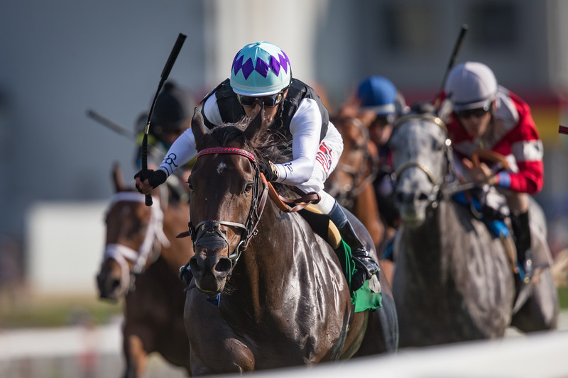Miss Temple City (Temple City) wins the Kentucky Downs Ladies Turf (G3) at Kentucky Downs on 9/9/2017. Edgar Prado up, Graham Motion trainer and Sagamore racing, The Club Racing, Needle in a Haystack owners.
