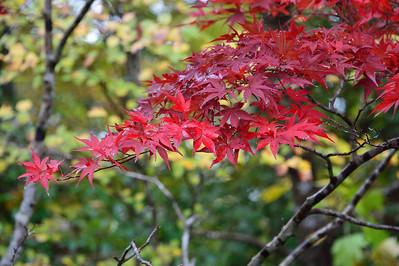 箱根湿性花園 November 2016