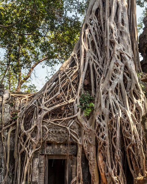Ta Prohm Doorway