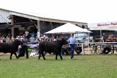 Senior Beef Showmanship 1