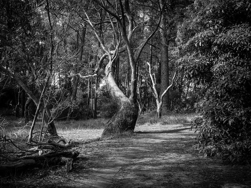 20180522 tree reference 1914  .JPG