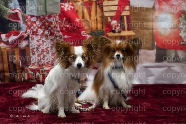 Kentucky Barnhunt Christmas 2020