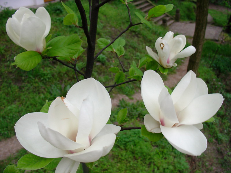 Китай 2005 256.jpg