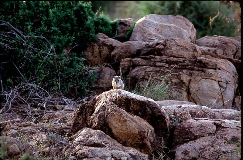 Kenya1_076.jpg