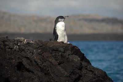 Galapagos, Ecuador