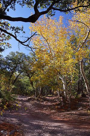 Gardner Canyon 2011