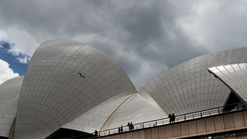 Bird Across the Opera House