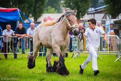 1207 Vlaams Kampioenschap Trekpaarden (Baardegem)