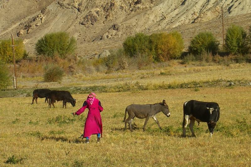 Pamiri Woman in the Fields - Wakhan Valley, Tajikistan