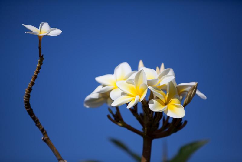 hawaii-5399.jpg
