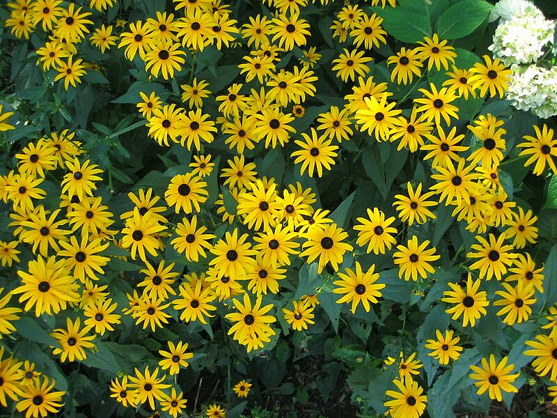 garden-2003-08-0185_std.jpg