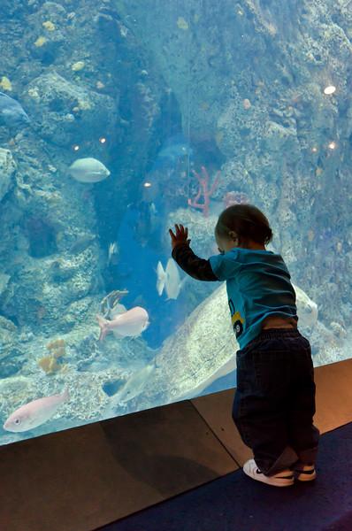 Gideon visits the Aquarium