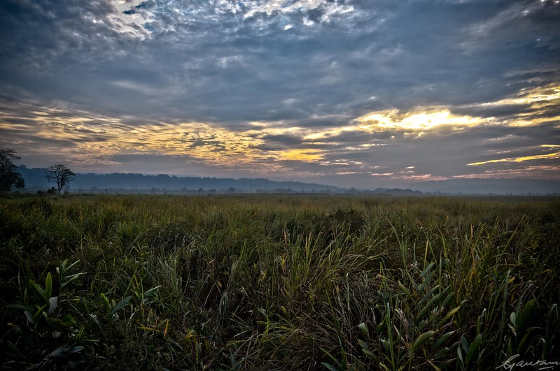 36: Kaziranga Forests HDR Experiment 24 December 2011