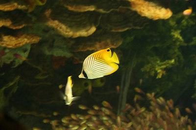 The day I turned in quals: aquarium and cartwheels!