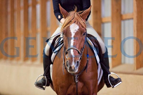 Geneseo Equestrian