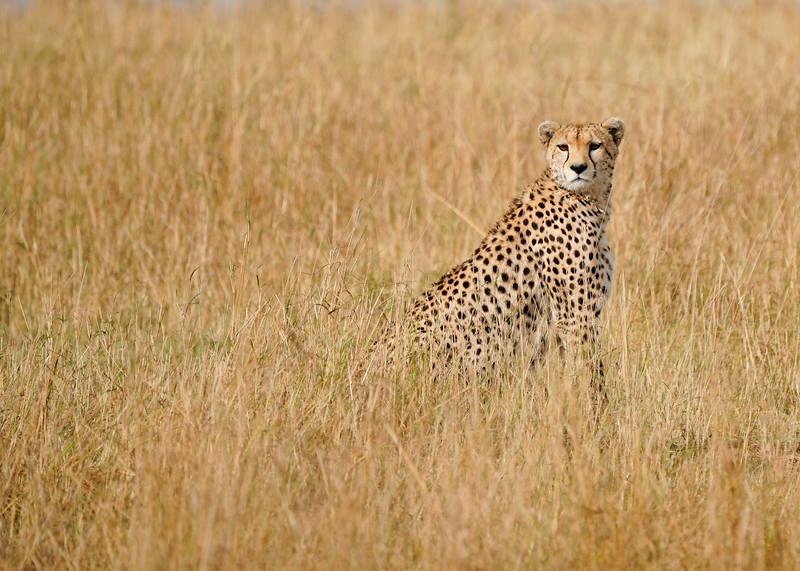 safari-2018-71.jpg