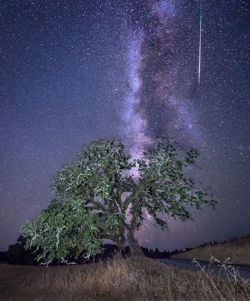 Perseid Meteor, Sonoma County, California