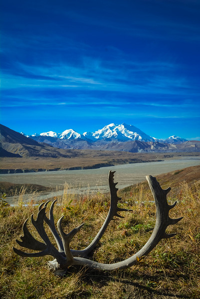 Denali-National-Park-104.jpg