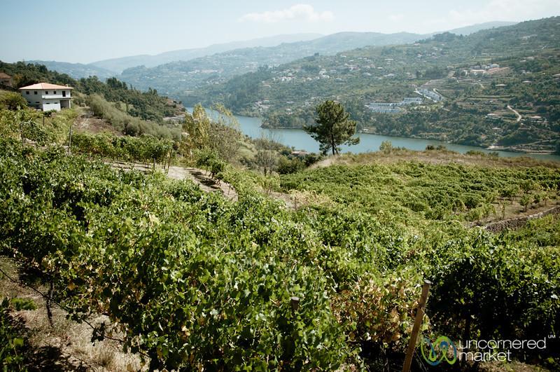 Douro Valley Vinyards - Portugal