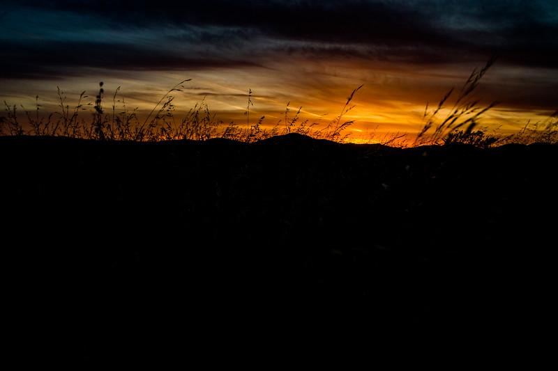 NORCAL14_nature_by AleDiLullo-8155.JPG