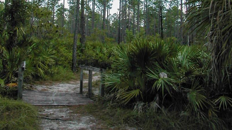 Bridge in pine flatwoods