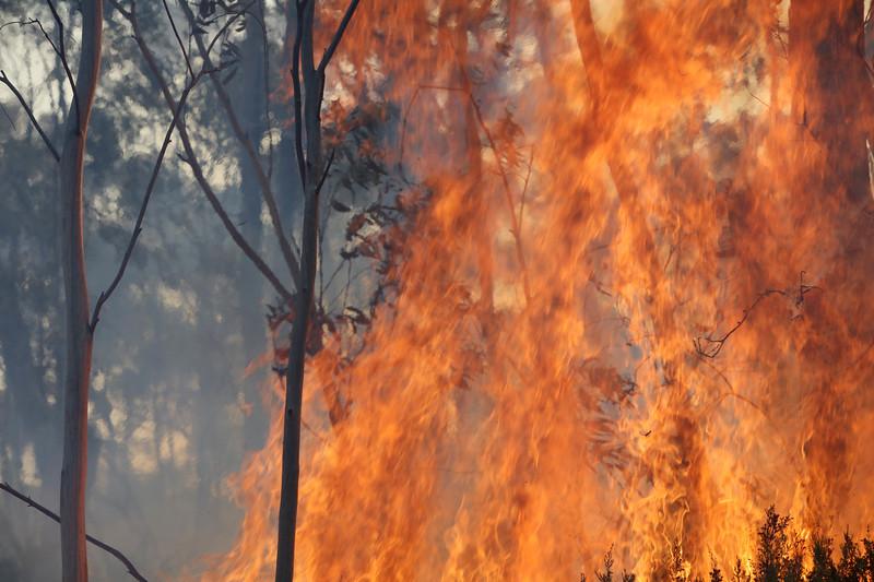 11. Australia Bushfires_10.JPG