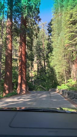 2020.06.21 Sequoia national park