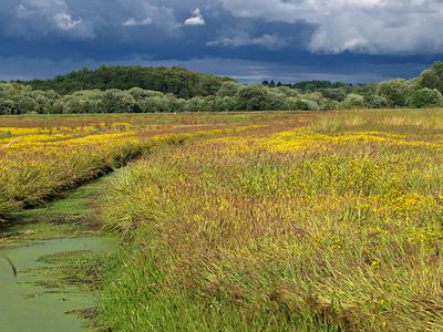 The Great Meadow Wildlife Refuge_2