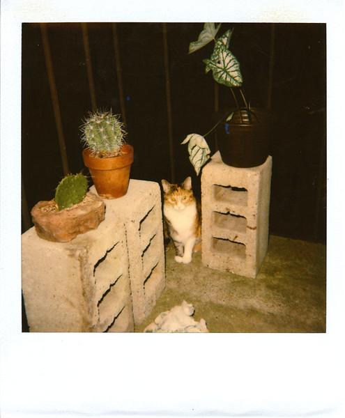 Polaroid_0077-XL.jpg