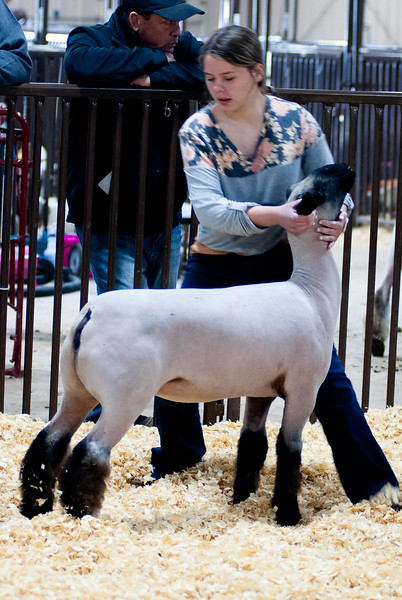 kay_county_showdown_sheep_20191207-84.jpg