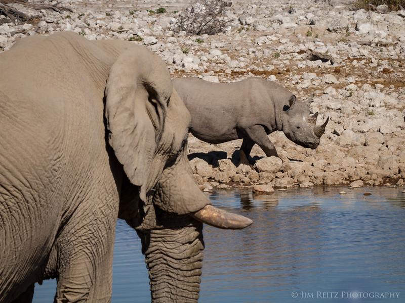 Elephant and rhino give each other plenty of space at the water hole - Etosha National Park, Namibia.