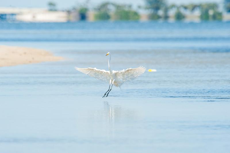 Fort Desoto Birds 2-20.jpg