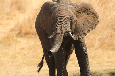 Southern Africa Trip 2012