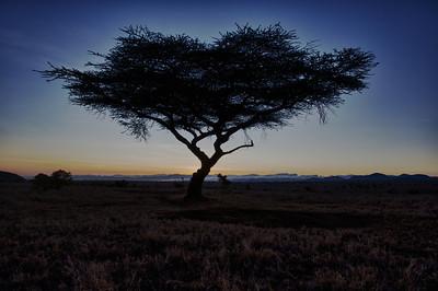 Africa -  Lewa Downs, Kenya