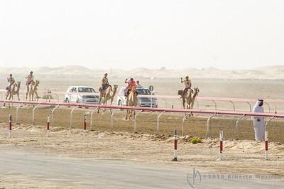 UAE - camel racing