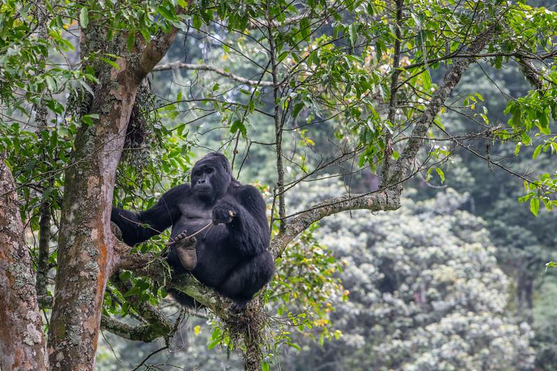 Uganda_T_Gor-1556.jpg