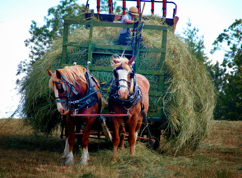 024  Amish hay boy  - Copy.jpg