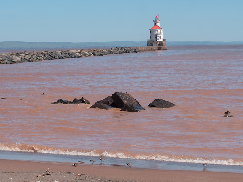 Ruddy Turnstone Wisconsin Point Lake Superior Superior WI  P1066417.jpg