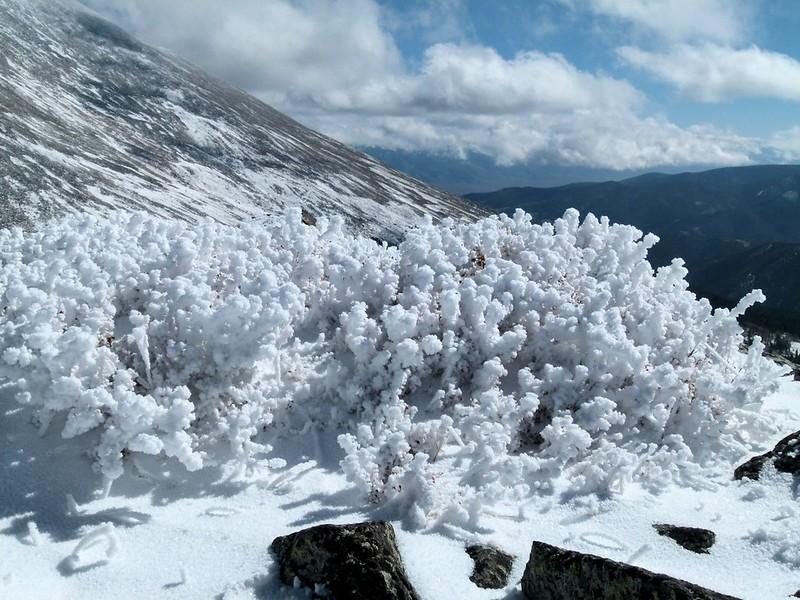 Nice bush ice sculpture