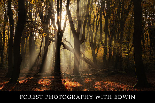 Material forest photography with Edwin