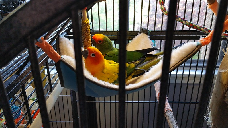 They love the hammock in the cage!