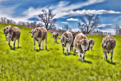 Farm Animals & Farm Life
