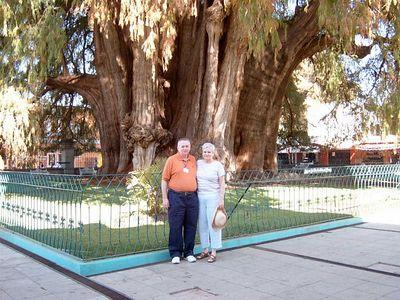 Tule Tree